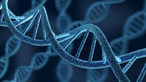 CZYNNIKI GENETYCZNE